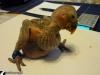 Karmienie-papug-13