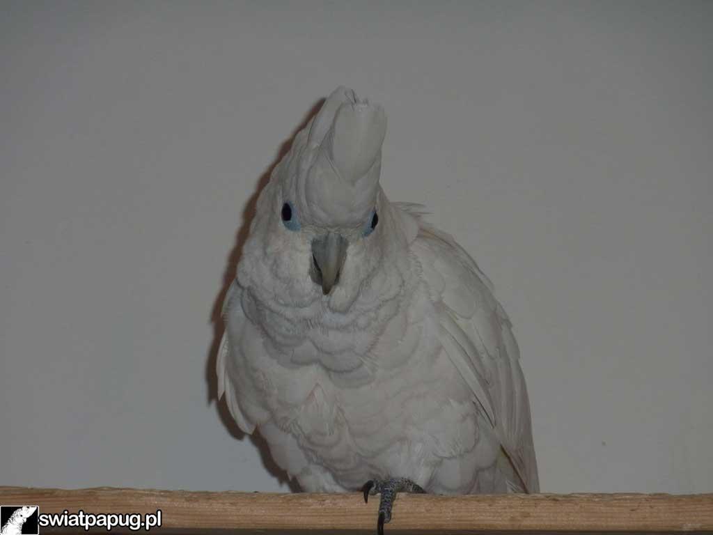 Kakadu-9
